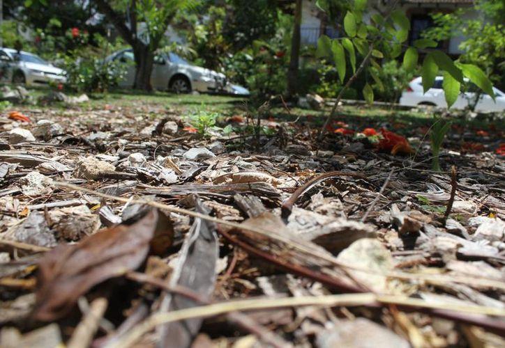 La humedad, así como el uso de productos naturales le brinda mayor calidad a la composta local. (Sergio Orozco/SIPSE)