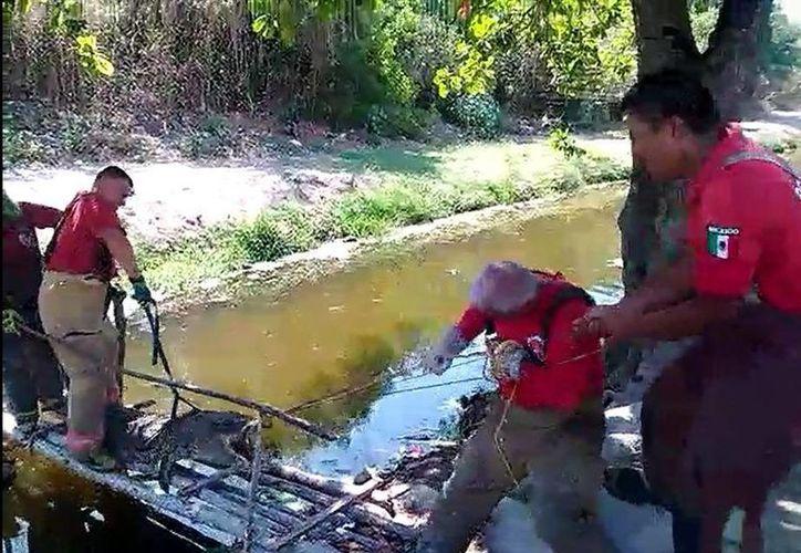 Encontraron al cocodrilo sin vida, amarrado del hocico y presentaba golpes en la cabeza. (Redacción/SIPSE)