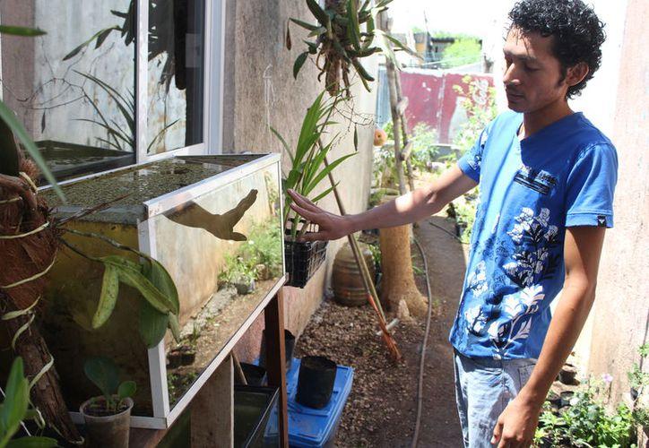 En Quintana Roo hay más de 30 especies de plantas, especialmente en el río Hondo, él tiene una colección cercana de 40 variedades de plántulas acuáticas. (Joel Zamora/SIPSE)
