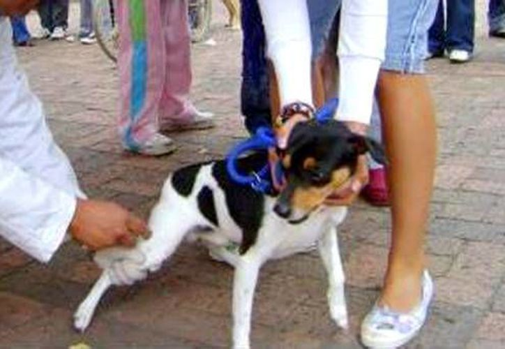 Las vacunas se aplicarán a perros y gatos que lleguen a los diferentes módulos que habrá en Cancún. (Redacción/SIPSE)