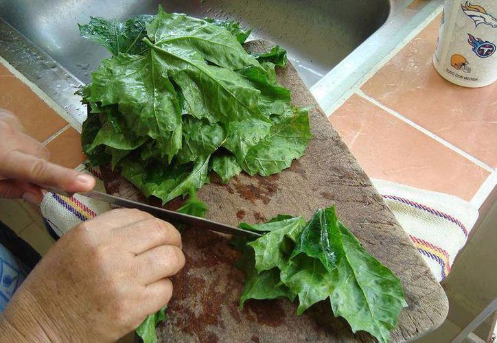 La chaya, muy socorrida en la cocina yucateca, es un gran antiinflamatorio y aporta gran cantidad de hierro. (Archivo/SIPSE)