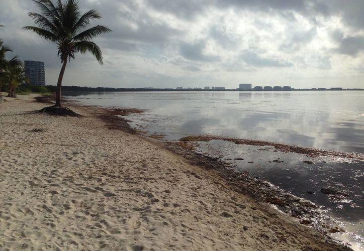 Otro de los atractivos que ofrece Playa Nizuc, es que la Zona Federal Marítimo Terrestre, la ha declarado como playa amigable para las mascotas. (Israel Leal/SIPSE)