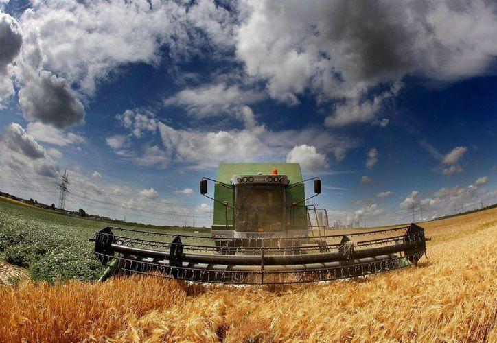 El IICA ha aprobado un plan para el período 2014-2018, que propone cuatro ejes que apuntan a garantizar la sustentabilidad de la agricultura. (Archivo/EFE)