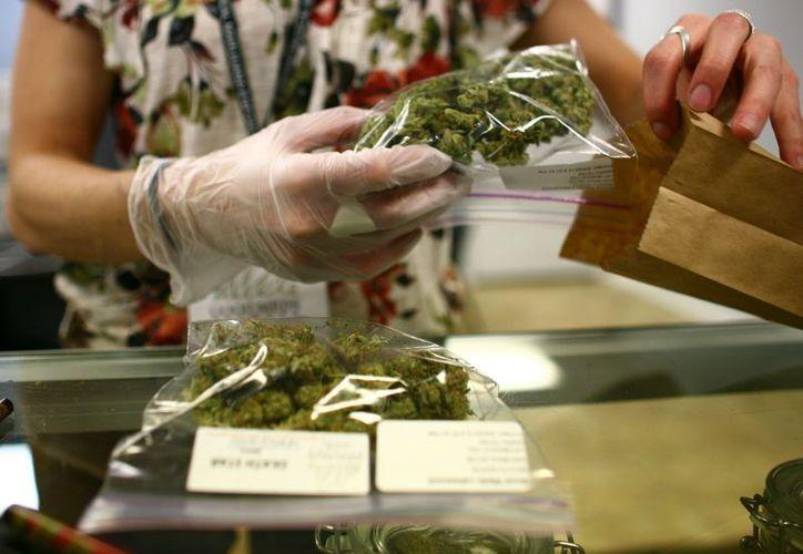 California autorizó el comercio de marihuana para uso recreativo. (Foto: El Txoro Matutino)