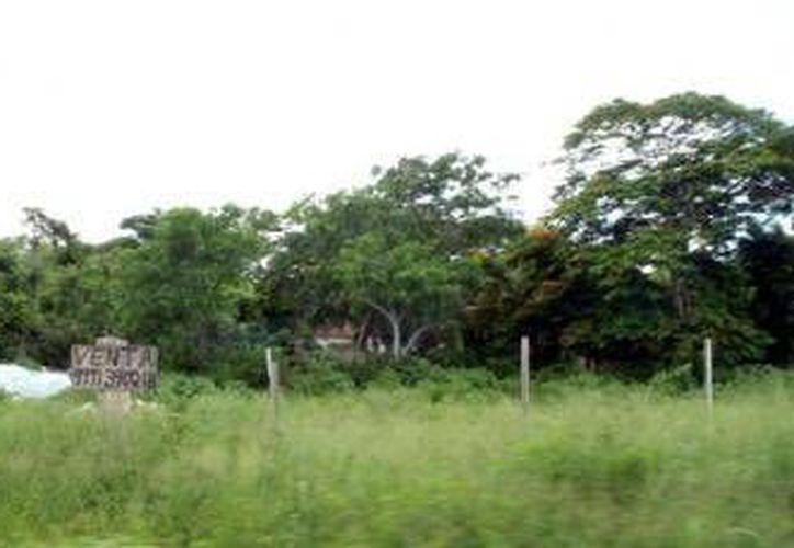 Estos terrenos preocupa a la población, ya que no sólo son criaderos de insectos, también son utilizados como guaridas de malhechores. (Redacción/SIPSE)
