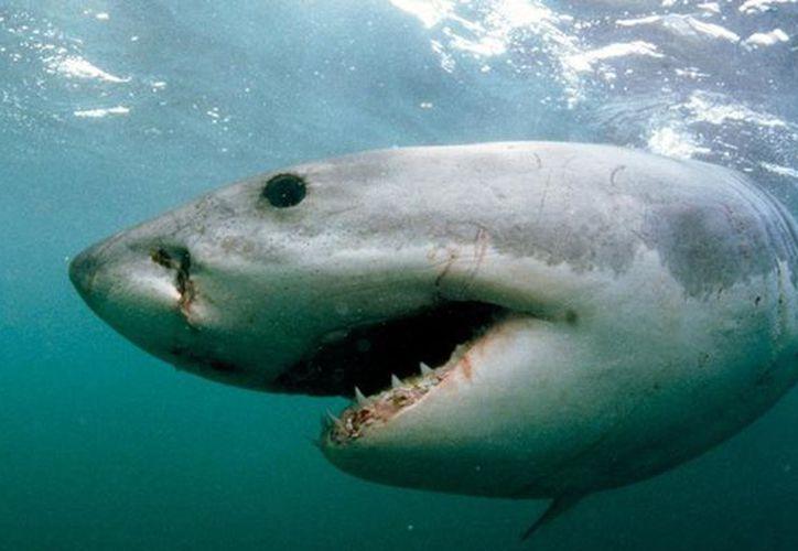 El tiburón le tiró varias mordidas y logró alcanzar la mano derecha del pescador. (Foto: Contexto/Internet)