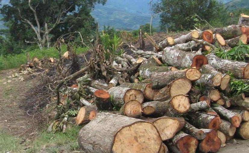 Las líneas de crédito son para obtener mejores planes de negocio de acuerdo con la producción que se genere en los bosques. (Redacción/SIPSE)