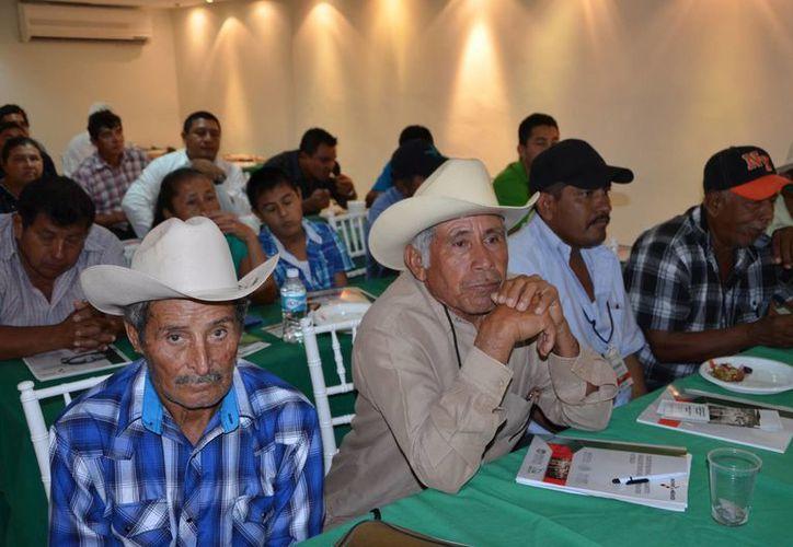 Ganaderos de Quintana Roo buscan asegurar el 100 por ciento de la población de animales en la entidad. (Benjamín Pat/SIPSE)