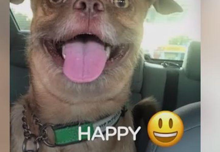 No hay emoji que el can no pueda imitar. (Foto: Facebook/The Dodo)