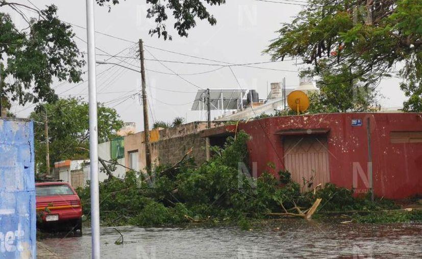 La lluvia de esta tarde trajo consigo fuertes vientos que ya generaron caída de árboles. (Novedades Yucatán)