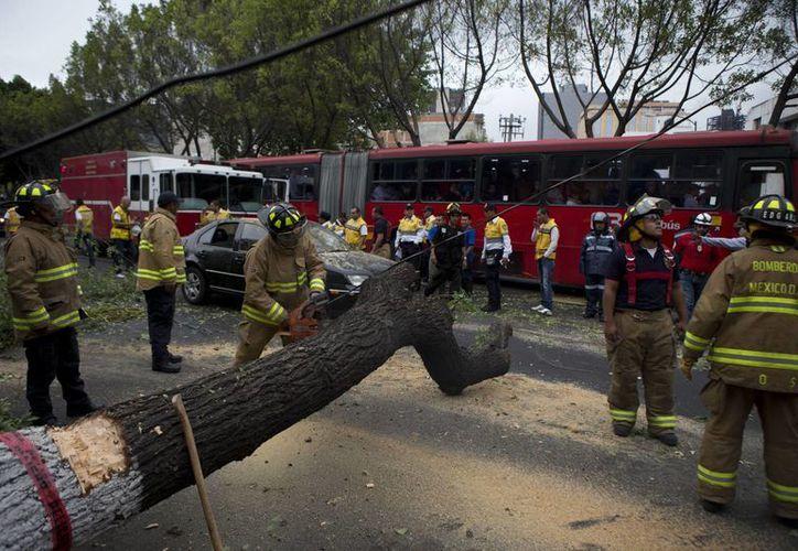 Bomberos cortan un árbol que se cayó a consecuencia del fuerte sismo ocurrido al mediodía de este jueves en la Ciudad de México. (Agencia AP)