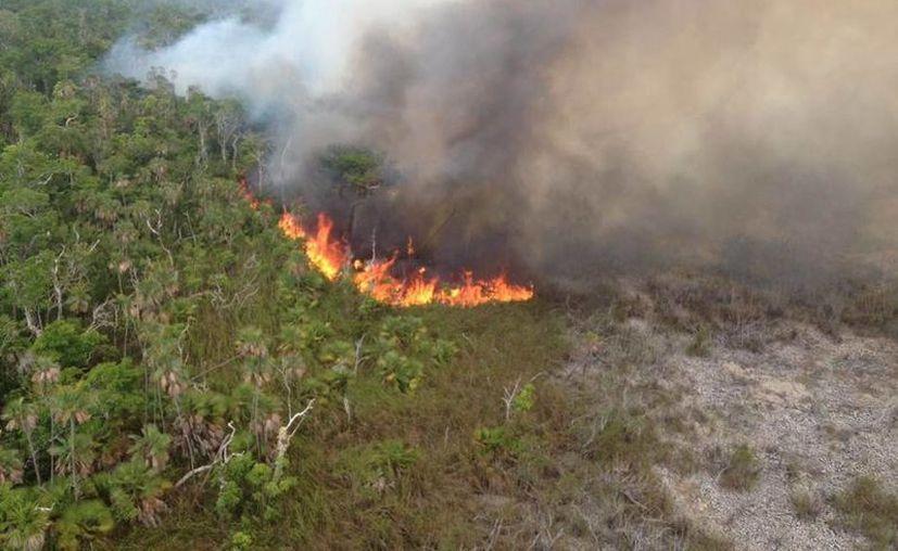 Las elevadas temperaturas producidas por el cambio climático causan cada vez más incendios forestales en Q. Roo. (Cortesía/Sedena)