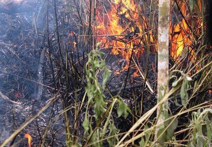 Prevén que la presente temporada de incendios sea intensa. (Edgardo Rodríguez/SIPSE)
