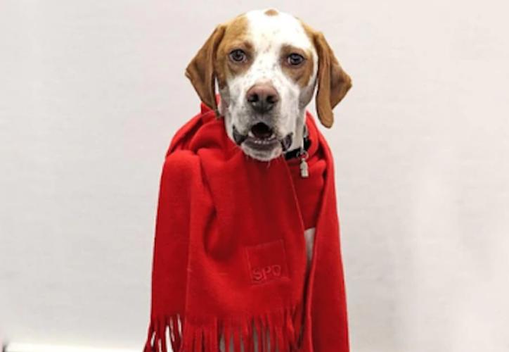 El periódico alemán Bild logró inscribir a una perra de tres años como miembro del Partido Socialdemócrata (Sin Embargo)