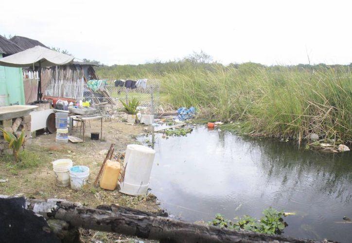 Las colonias de la sabana, al norte de Chetumal, tienen mayor riesgo de contagio, pues el mosco busca agua limpia acumulada. (Harold Alcocer/SIPSE)