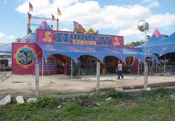Un trabajador del circo Harley dio positivo a dengue clásico y tratan de localizarlo. (Julián Miranda/SIPSE)