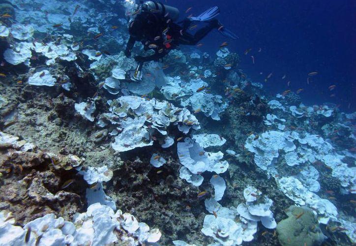 Según la Sociedad Internacional para los Estudios de los Arrecifes, la Gran Barrera de Coral en Australia, que se encuentra en peligro, es el arrecife más grande y famoso de todos existentes. (AP)