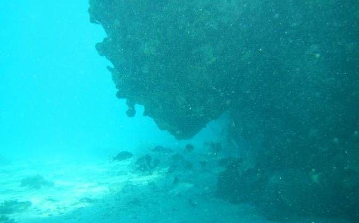 Inició este lunes la investigación de la Profepa por posibles daños en el Arrecife Alacranes debido al aterrizaje de una aeronave. (Profepa)