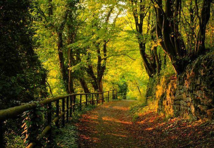 Primero que nada, debes pensar que estás haciendo una caminata en un bosque. (Contexto/Internet)