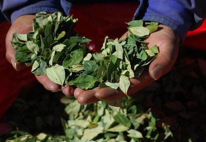 Bolivia envió hace más de dos años unas cargas de coca para que científicos cubanos analizarán las propiedades curativas de la planta. (sp.ria.ru)