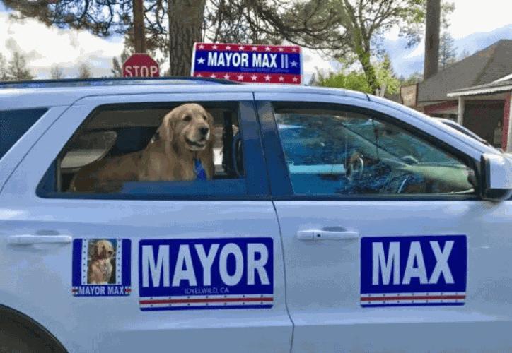 El primer alcalde canino de la comunidad de la pequeña ciudad de Idyllwild fue tío del actual alcalde Max. (Foto: Twitter)
