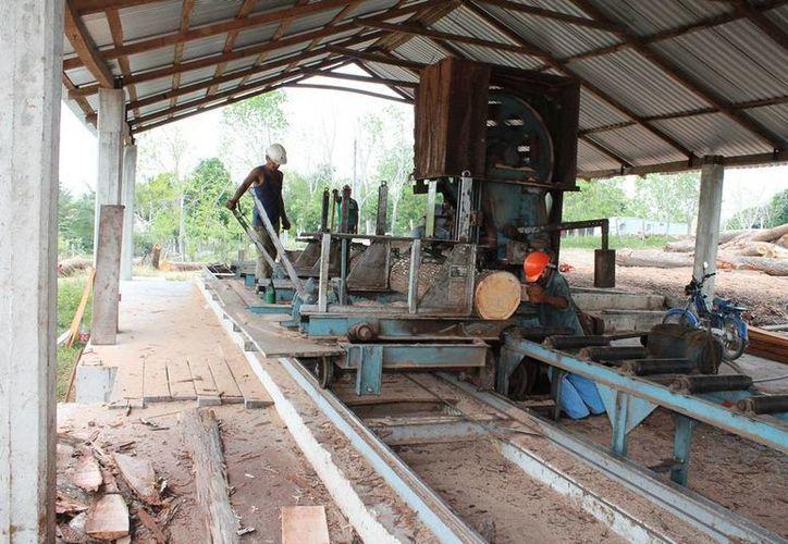 La industria maderera se prepara para recuperar terreno en el sector, que se había perdido hace años. (Edgardo Rodríguez/SIPSE)