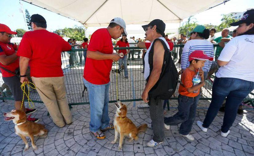 El Centro de Atención Canina ha ofrecido más de 18 mil servicios a bajo costo en Cancún. (Redacción/SIPSE)