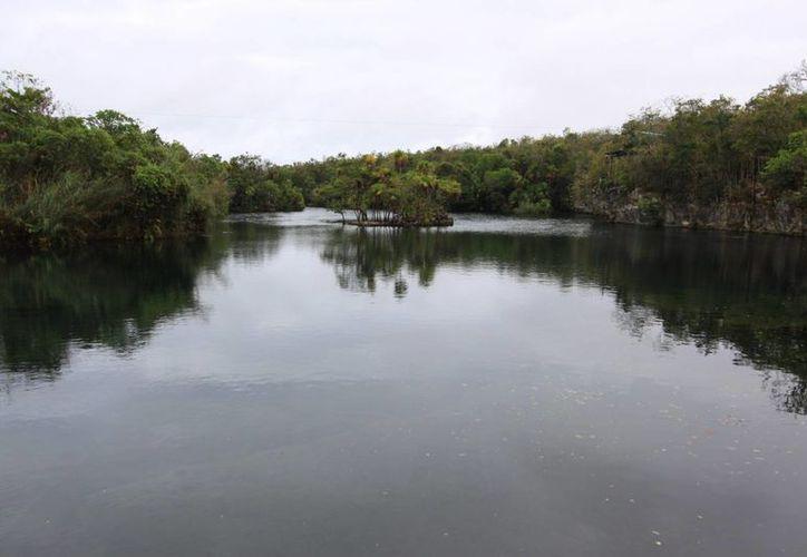 Los manglares son considerados como una barrera natural en caso de que se presente un huracán. (Luis Soto/SIPSE)