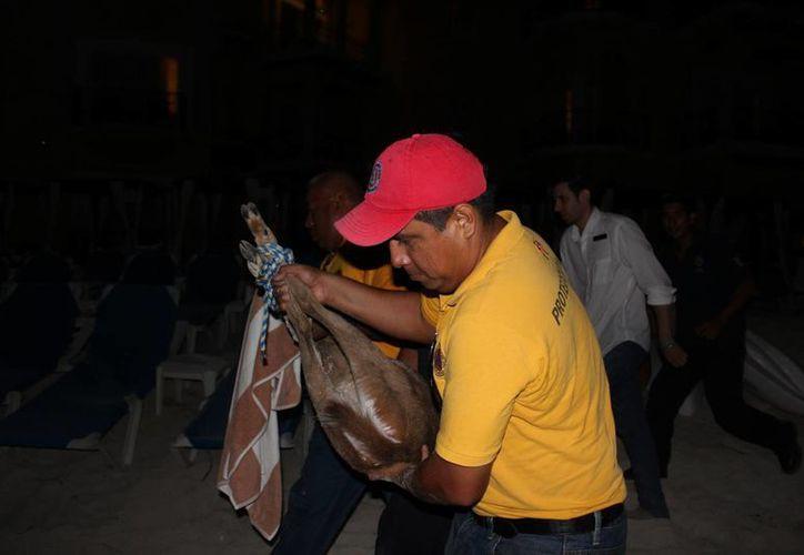 El venado fue rescatado en la zona de playas del centro de Playa del Carmen, la noche del lunes. (Octavio Martínez/SIPSE)