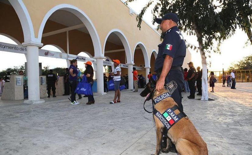 La Policía de Mérida y la Secretaría de Seguridad Pública se apoyan en cinco perros para la vigilancia de las instalaciones de la llamada Plaza Carnaval, en Xmatkuil. (Cortesía)