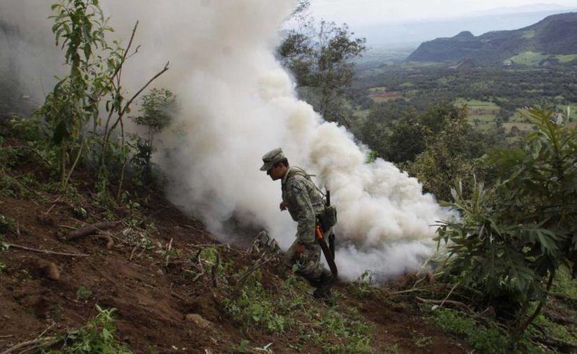 Elementos del Ejercito destruyen un plantío de marihuana en el estado de Veracruz. (Archivo/Notimex)