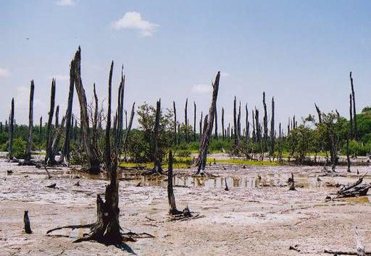 Por la aparición de cadáveres, esa zona de Villahermosa, Tabasco, es conocida como la laguna de los muertos. En la imagen, el bosque petrificado de Celestún, Yucatán. (SIPSE)