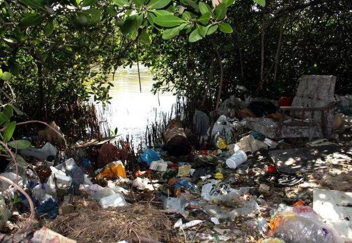 Exhortan a las personas que viven y visitan las áreas naturales protegidas a no dejar desperdicios. (Archivo/SIPSE)
