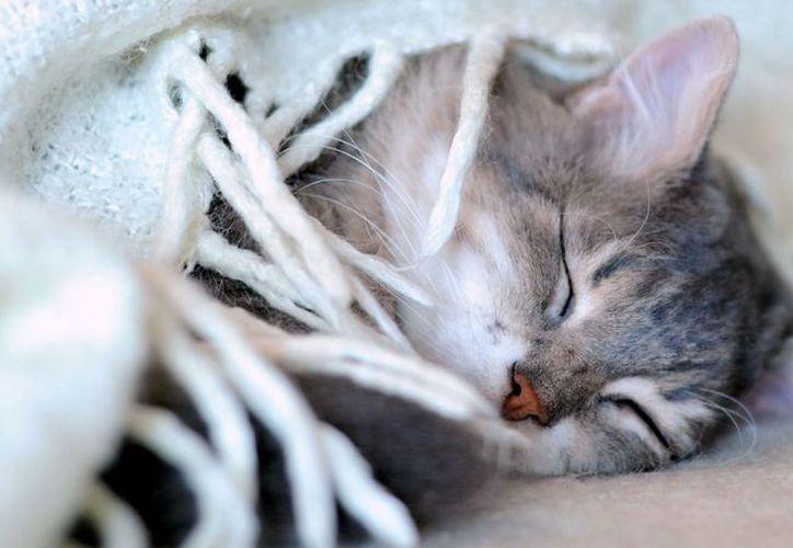 El año pasado un sujeto disparó con arma de fuego a un gato que se acercó a su vivienda. (Foto: Contexto)