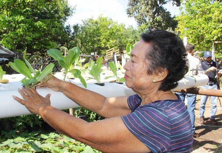 En el huerto, ya se ha sembrado cilantro, tomate, rábano, lechuga, pimiento, romero, melón, calabaza y pimiento entre otros productos. (Foto: Milenio Novedades)
