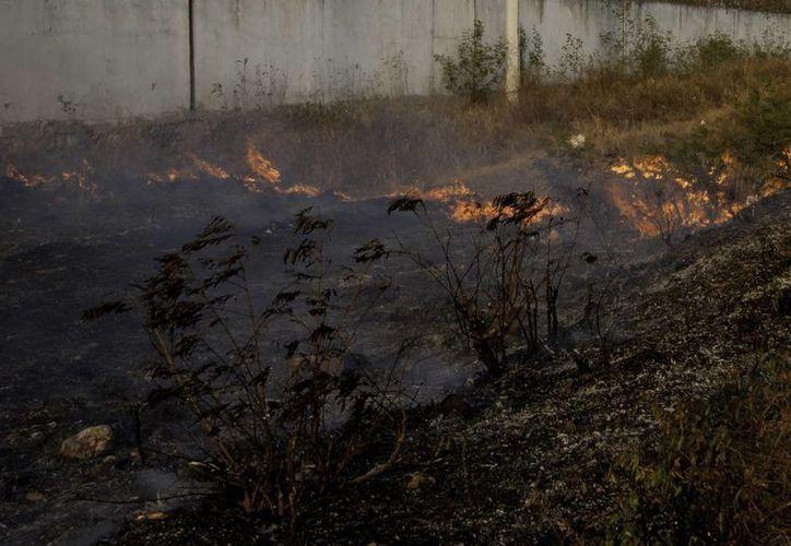 Las entidades más afectadas por los incendios forestales fueron Baja California, Chiapas, Veracruz, Oaxaca y Colima. (Archivo/Notimex)