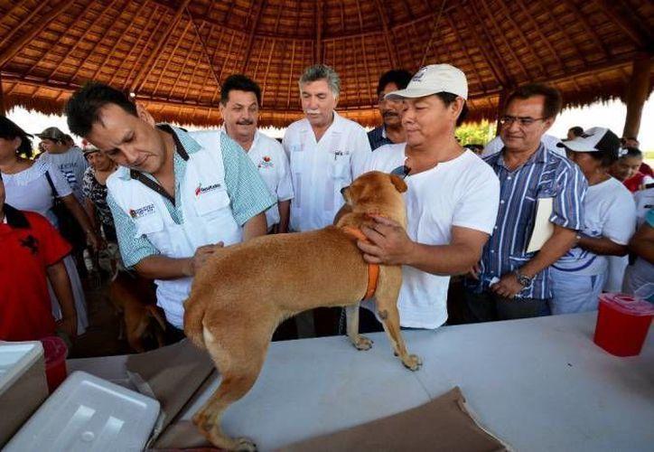 Las autoridades buscan crear conciencia sobre la tenencia responsable de una mascota. (Archivo/SIPSE)