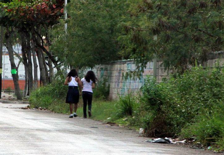 Los terrenos baldíos propician criaderos de moscos. (José Acosta/SIPSE)
