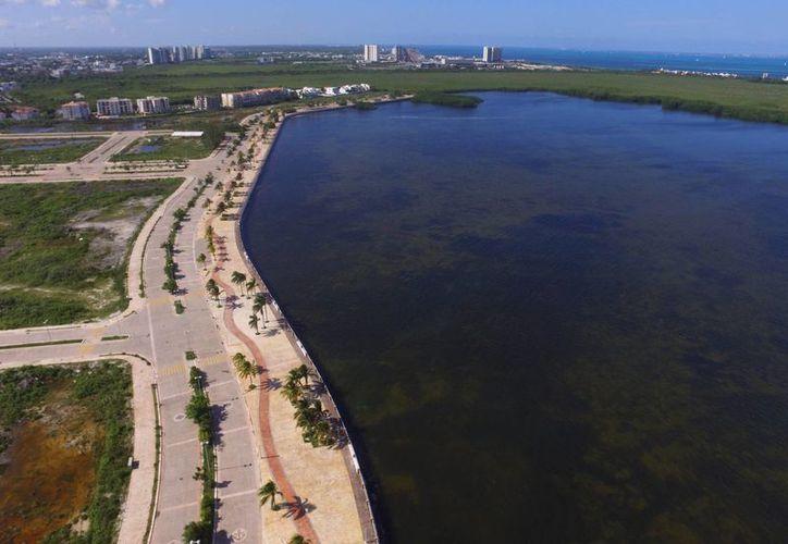 El 7 de enero la Profepa informó en un boletín que no existe evidencia de la supuesta presencia de peces muertos en la Laguna de Tajamar. (Israel Leal/SIPSE)
