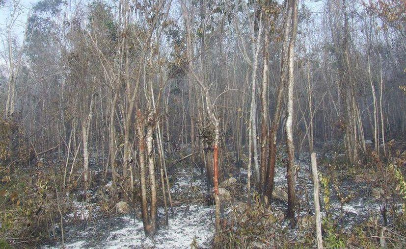Hasta la tarde de ayer, el fuego había sido extinguido en un 90 por ciento. (Rossy López/SIPSE)