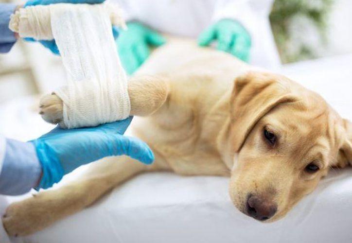Los dueños de los animales aprenderán a armar un botiquín para sus mascotas. (Foto: Contexto/Internet)