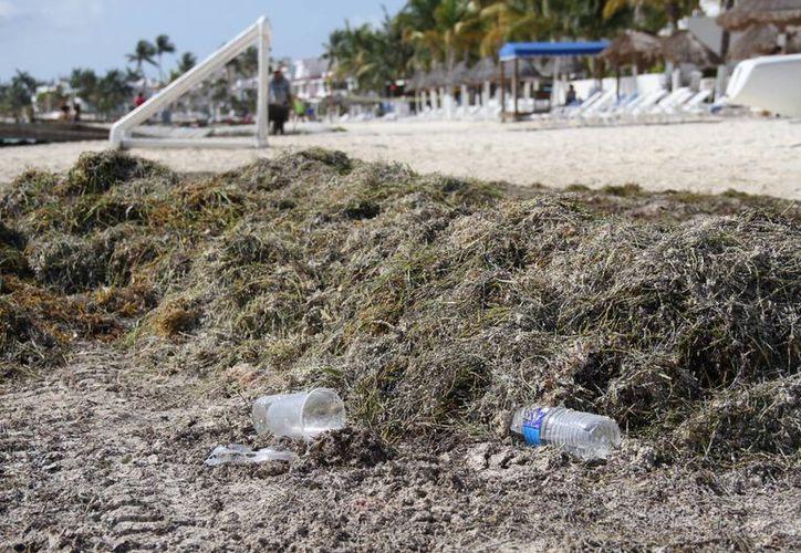Una persona que se dedica al trabajo de limpieza playas recibe un salario de menos de 100 pesos al día. (Yajahira Valtierra/SIPSE)