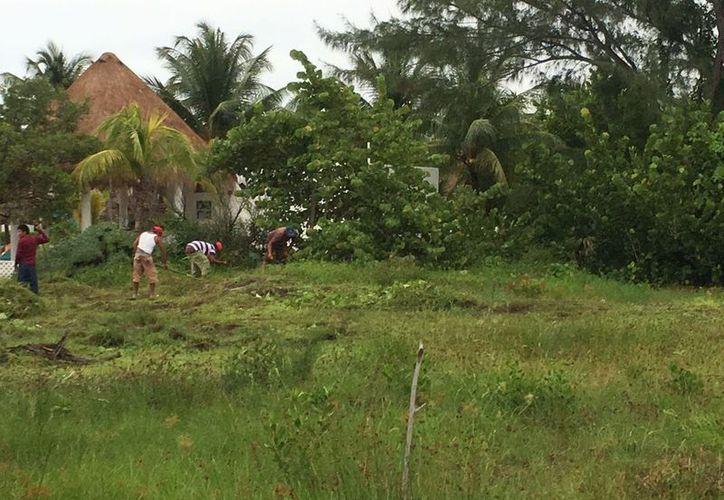 Los trabajadores que limpiaron un área de la isla. (Gloria Poot/SIPSE)