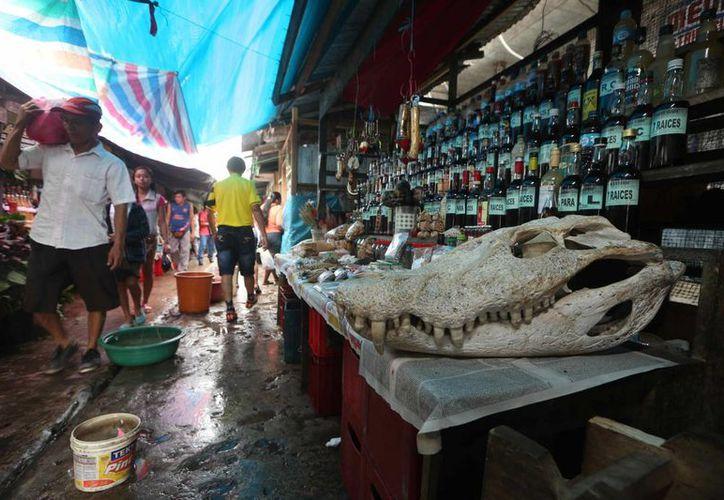 Imagen de un cráneo de un caimán o 'lagarto' en la decoración de un puesto que ofrece bebidas afrodisiacas en el tradicional 'Pasaje Paquito' en el mercado de Belén, Iquitos, Perú. (EFE)