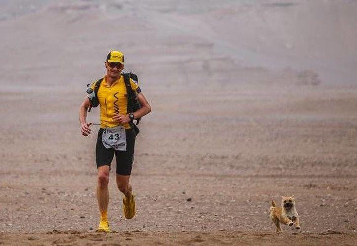 Una perrita sin hogar acompañó a Dion Lenard durante la ultramaratón de 250 kilómetros a través del desierto de Gobi, en China, en el sistema montañoso de Tian Shan. El atleta regresó al país asiático para adoptarla. (Actualidad RT)