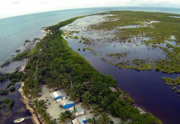 En México hay 15 organizaciones que velan por la conservación del medio ambiente; en Q. Roo hay cinco de ellas. (Redacción/SIPSE)