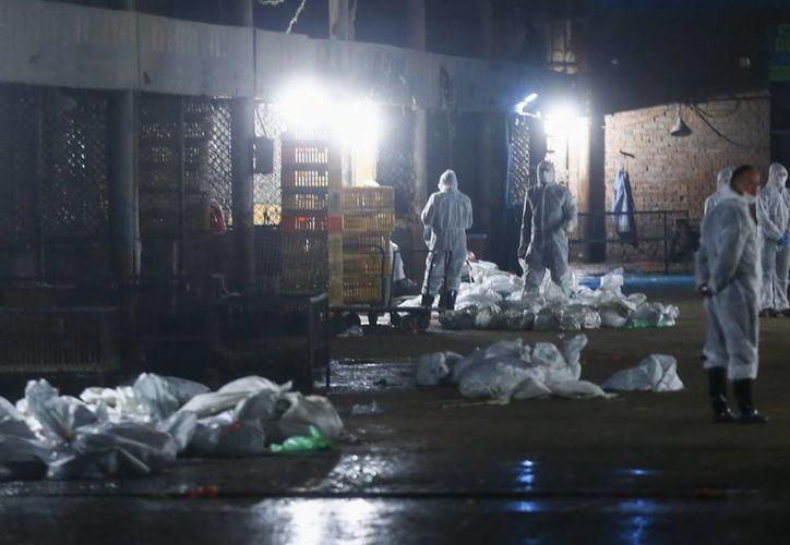 Varias personas con trajes protectores trabajan en una planta en la que se sacrifican todos los pollos de un mercado después de que se encontrase una paloma infectada con el virus de la gripe H7N9 , en Shangái. (EFE)