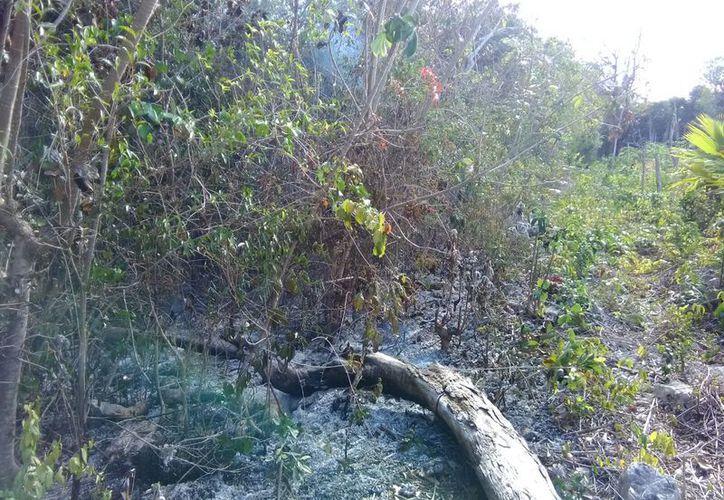 Se han incendiado puntos de una zona en donde se están quitando árboles para desarrollar casas, aseguran. (Foto: Adrián Barreto)