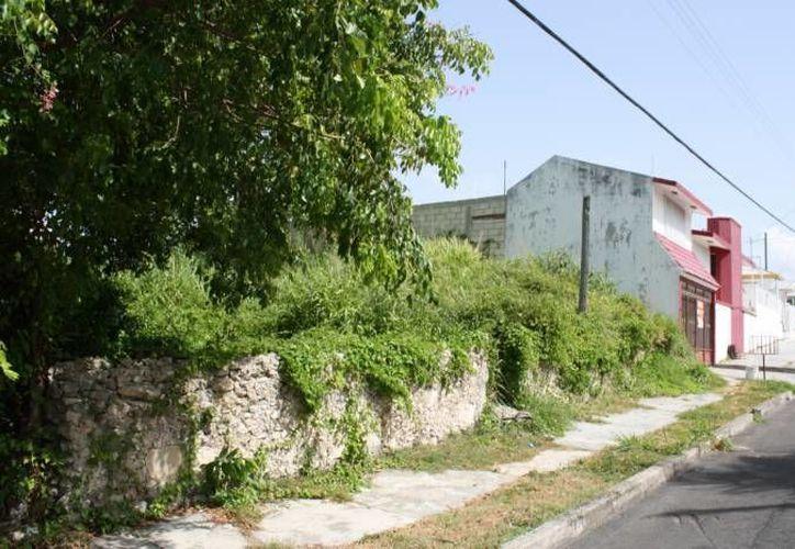A propietarios de baldíos en Mérida les costará caro descuidarlos. (Milenio Novedades)
