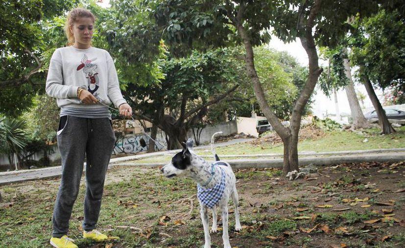 Los perros participarán en la carrera en compañía de sus dueños. (Yajahira Valtierra/SIPSE)